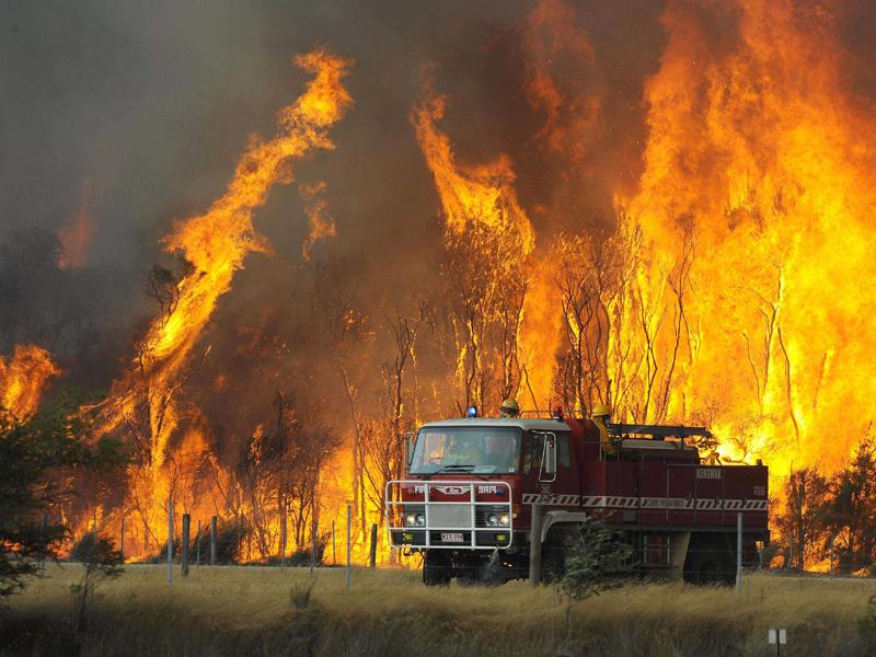 Gambar Hutan Terbakar