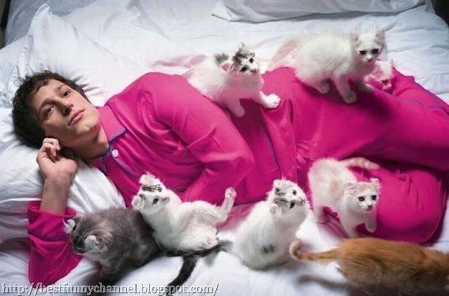 Funny kittens.
