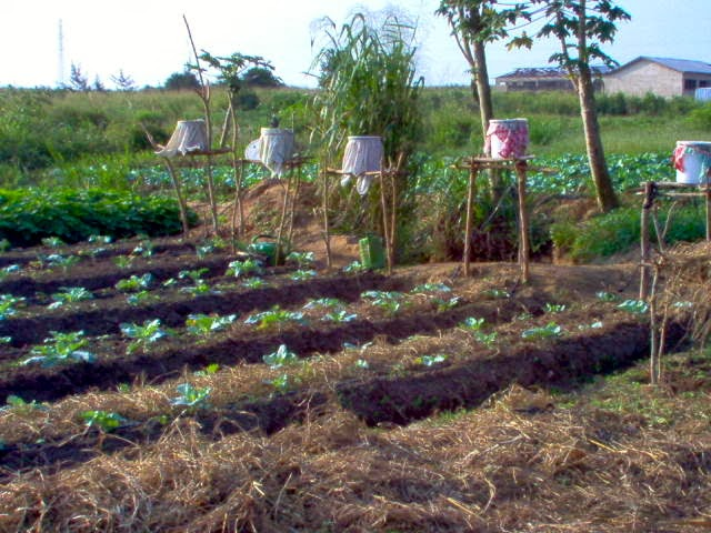 Regenerative Agriculture Through Drip Irrigation Systems