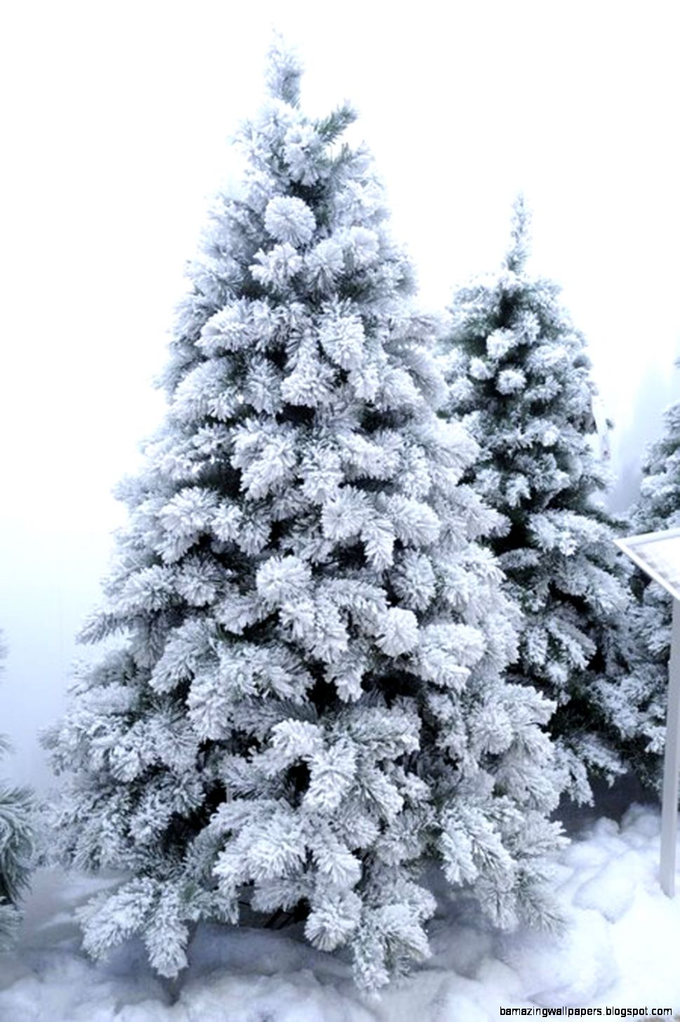 VANCOUVER MIXED PINE TREE 8 FT  SNOWY GREEN  Southern Blossoms