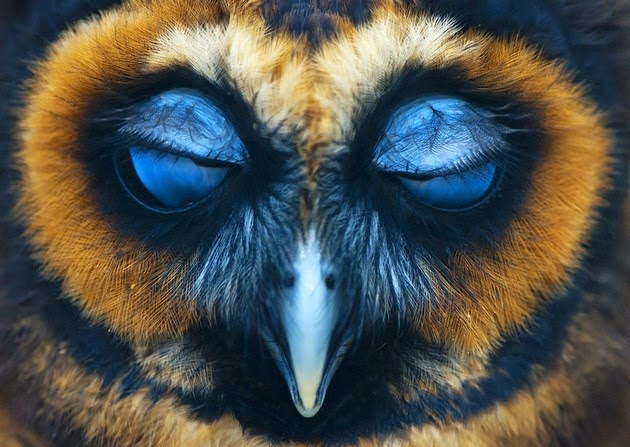 breathtaking pictures of owl