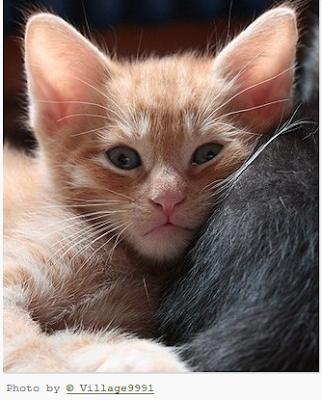 Apa sih yang menyebabkan seseorang menderita alergi terhadap kucing???