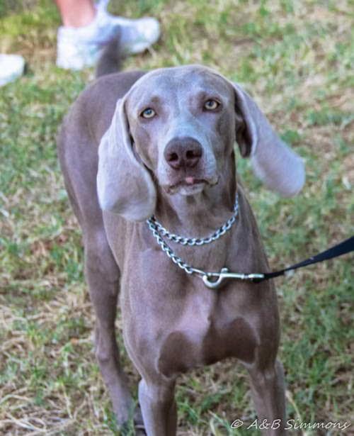 2014 Sacramento SPCA Doggy Dash