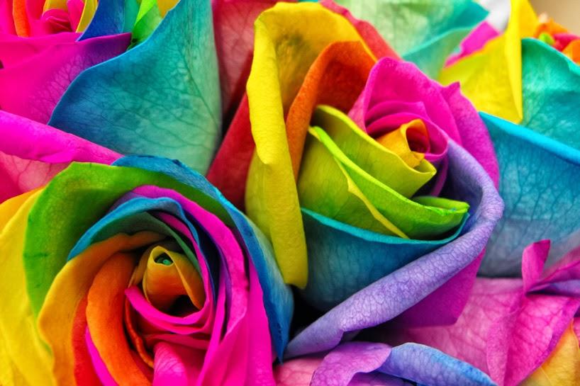 All 4u hd wallpaper free download rainbow flowers for Rainbow rose wallpaper