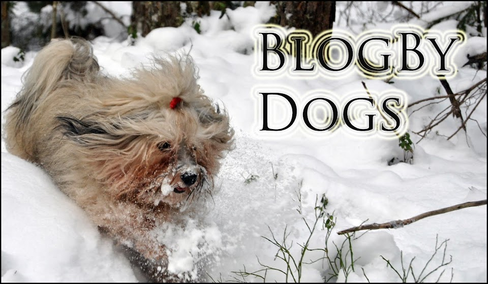 Blog By Dogs