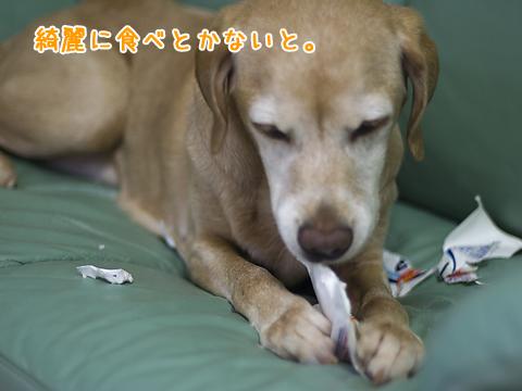 前足を器用に使う犬