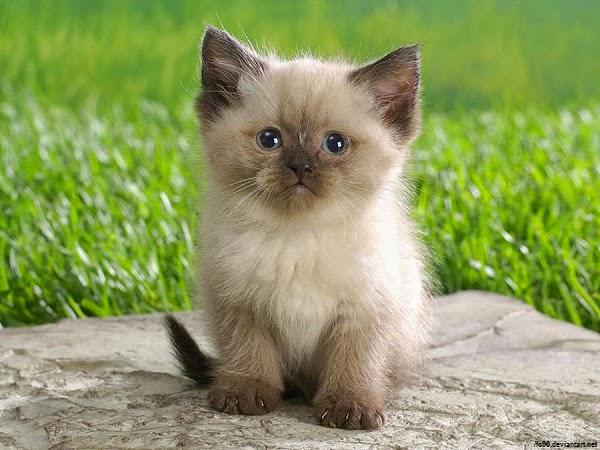 Photo chat très mignon