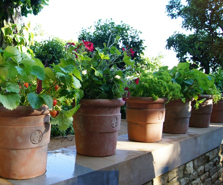 Growing Vegetables In Pots   What Is Most Challenging?