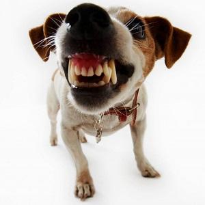 Problemas de Conducta en los Perros con enfermedades parasitarias