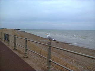 Seagull in Hastings