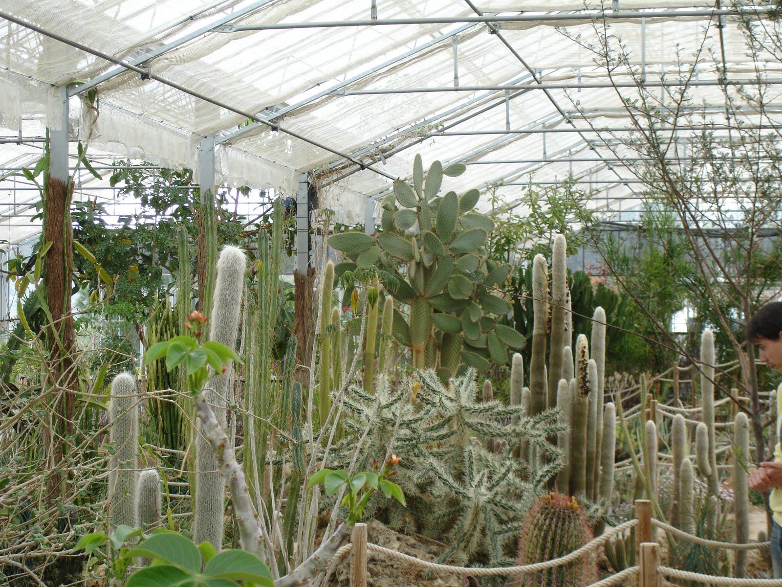 La casa de los cactus visita al jardin botanico de cactus for Casa jardin botanico