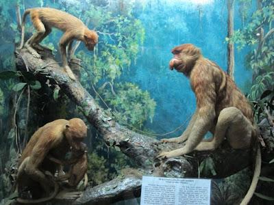 museum zoologi bogor 2