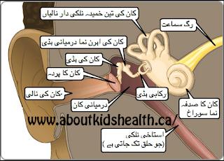 ear infection in urdu