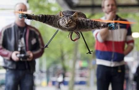 kucing terbang-3