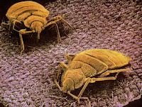 bed bugs, mattress hygiene
