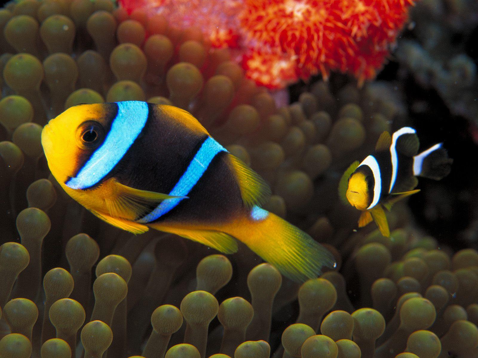 http://3.bp.blogspot.com/-hfiAlAOTCBQ/TkrRbQ4FF2I/AAAAAAAALkk/iTHlA_TdFJ0/s1600/Underwater+Wallpapers+%252821%2529.jpg