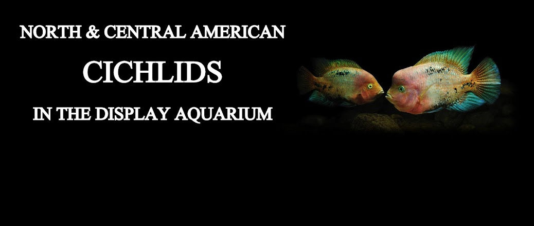 North &amp; Central American Cichlids in the Display Aquarium