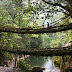 Nature's Marvel: Living Root bridges of Cherrapunji.