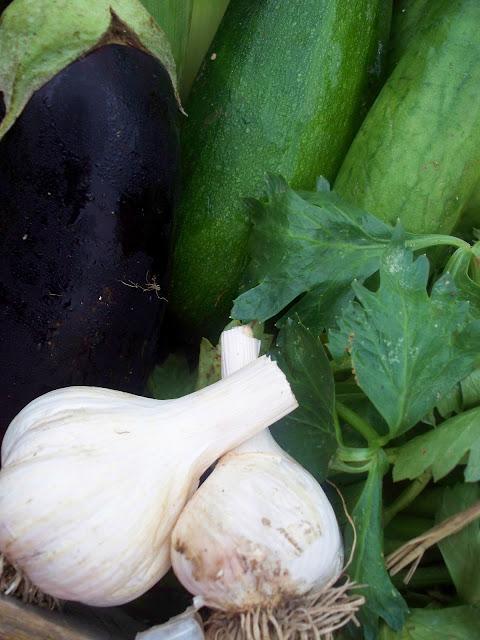 organic garlic eggplant, celery cucumber zucchini