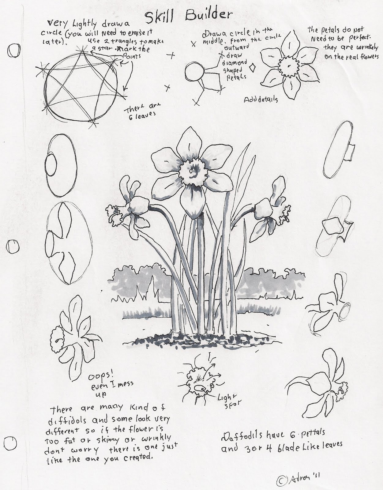 adron u0026 39 s art lesson plans  how to draw a daffodil  a skill