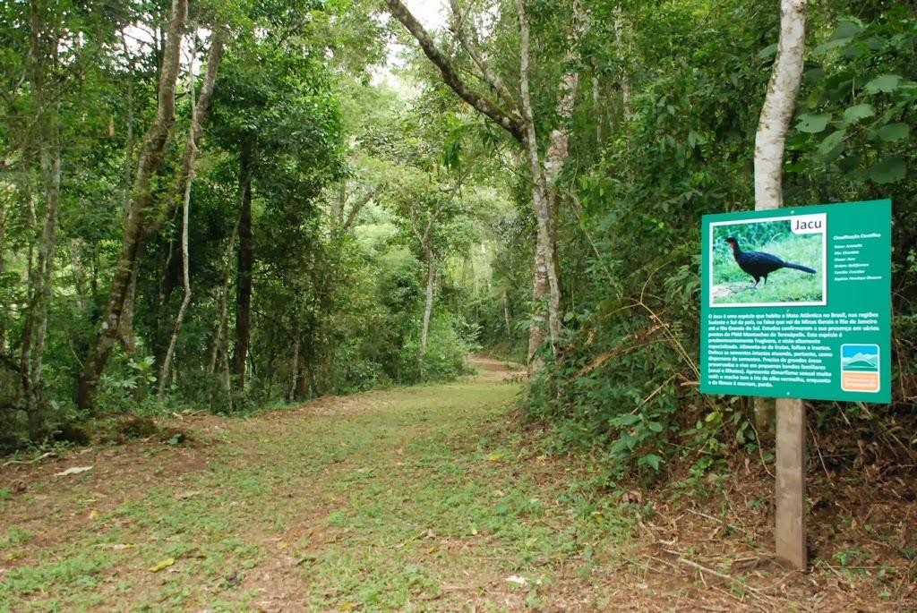 Trecho da Trilha do Jacu: 890m de extensão e grau leve de dificuldade