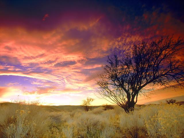 Almond tree, antelope valey, california HD wallpaper