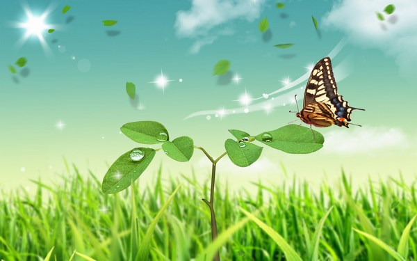 Desktop HD Butterfly Pictures Free Download