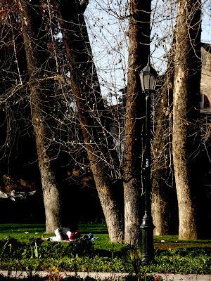 http://www.grafitudes.blogspot.com/2012/07/una-tarde-de-arboles.html