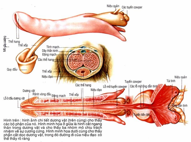 Phương pháp phẫu thuật để tăng kích thước dương vật
