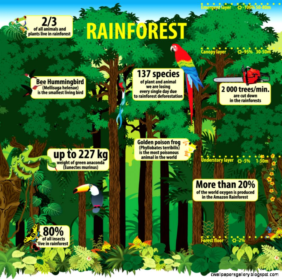 6 Ways Brazil is Saving the Amazon  Conserve