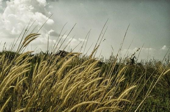 Pengertian dan Ciri Dunia Tumbuhan