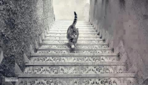 لغز قوة الملاحظة ملاحظة ذكاء و سرعة بديهة هل القطة صاعدة أم هابطة ؟