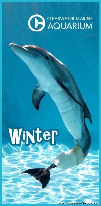 Wintertowel744431435242823