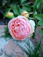 rosal Evelyn