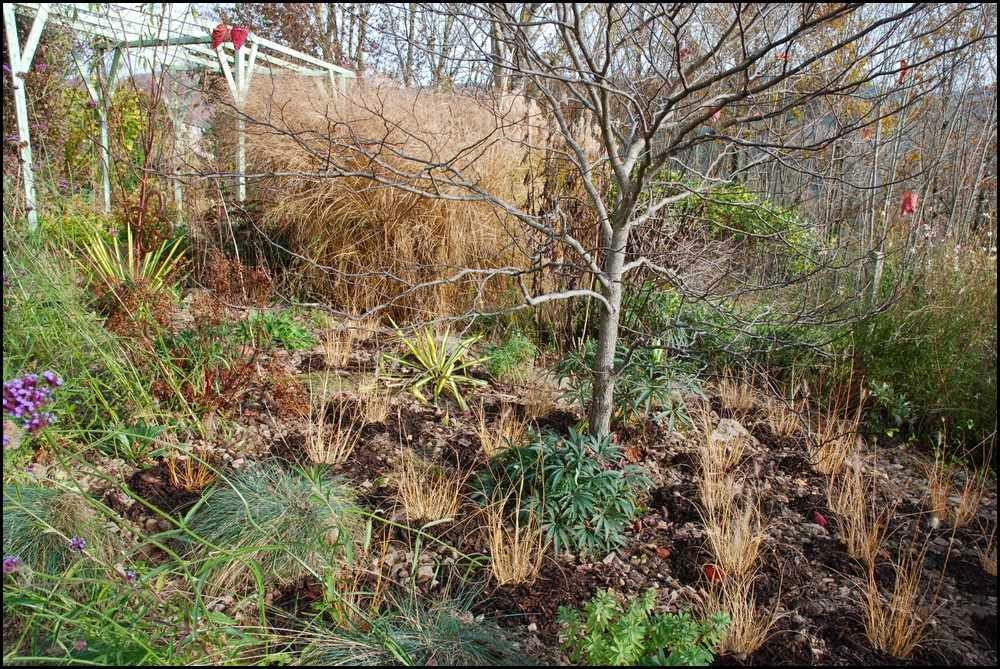 Le jardin du mayet du changement dans le massif de for Jardin hiver plantation