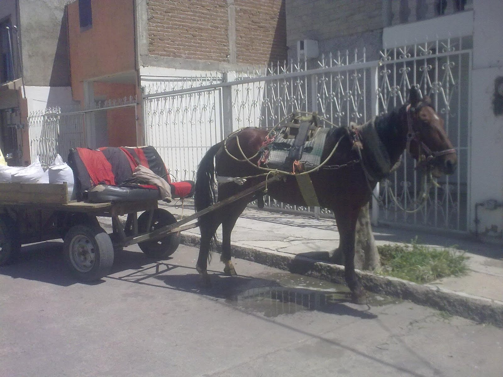 Imagenes Chistosas Mexicanas