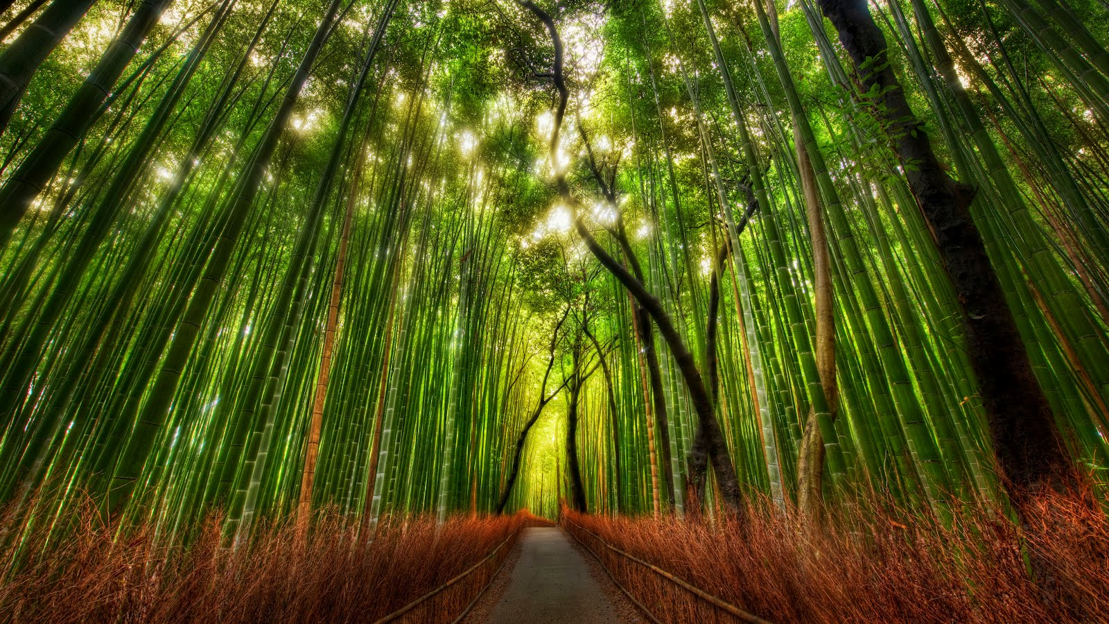 wallpaper collections bamboo forest hd wallpaper