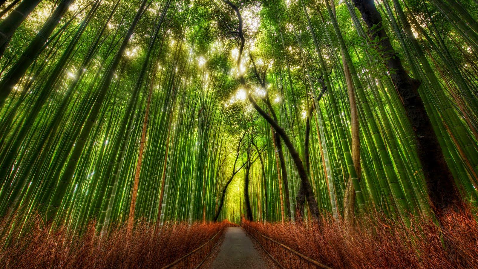 http://3.bp.blogspot.com/-hiEO_o6fXR8/T1e5VrwnxFI/AAAAAAAAEbc/5ZbDmWZ-w74/s1600/Bamboo-Forest1-3840x2160.jpg