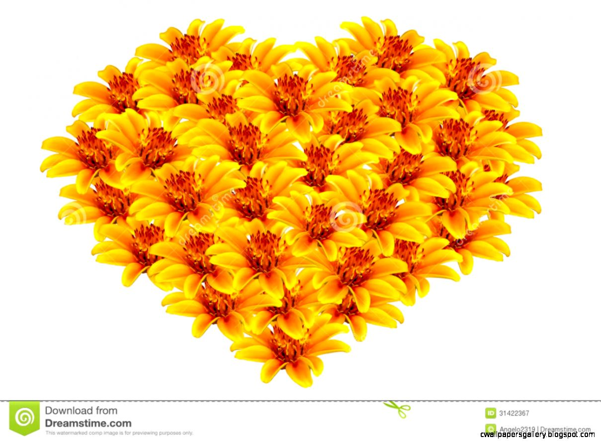 Beautiful Yellow Flowers Heart shaped Royalty Free Stock Image