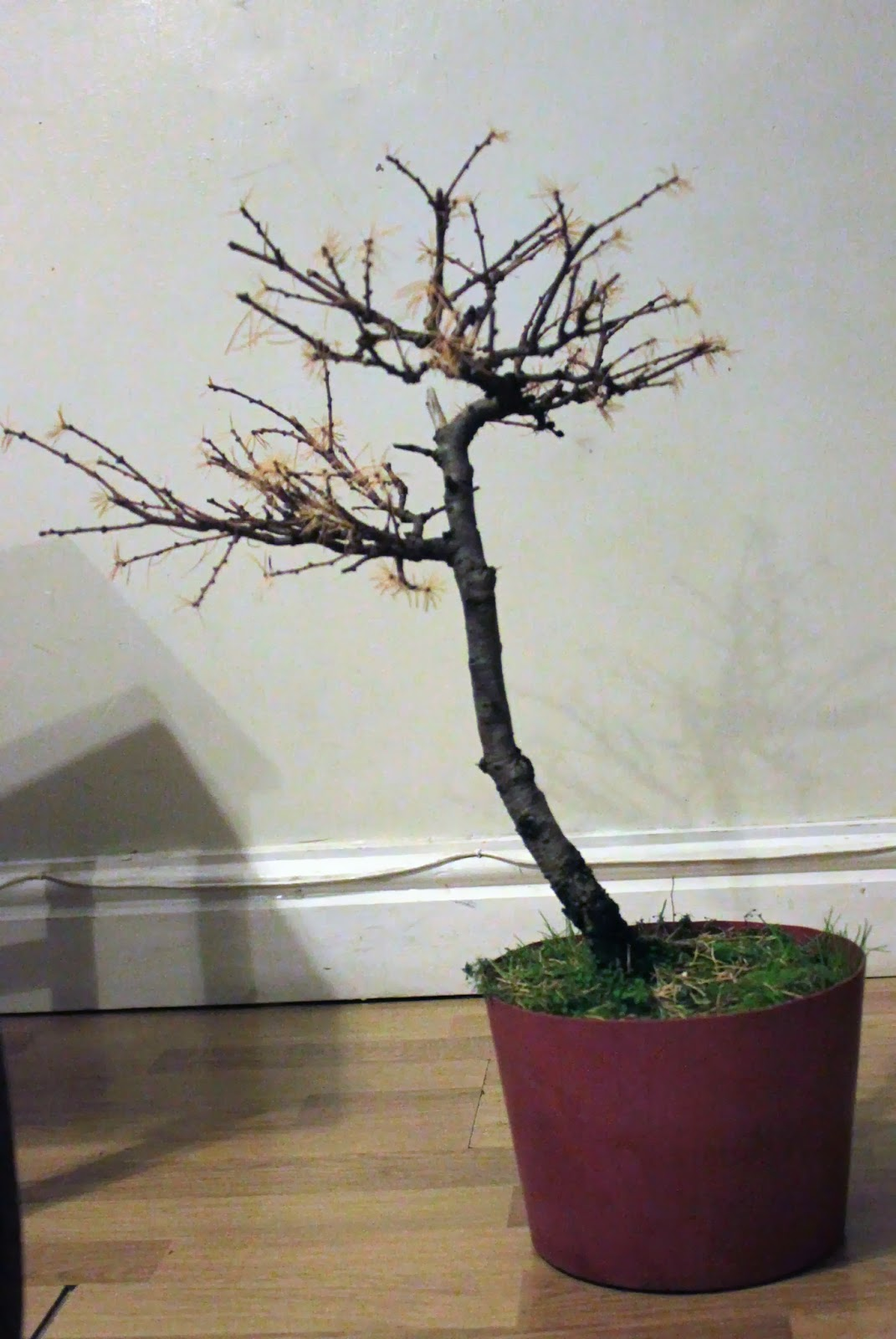 Yamadori Art UK November 2013