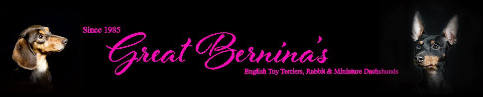 Great Bernina's