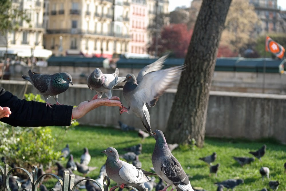 Pigeons on somebody's hand