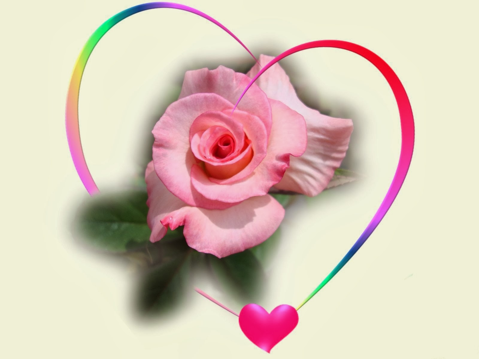 Pink Rose Hearts Roses Heart Isolated Love Wallpapers