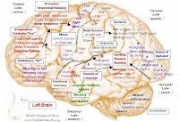 Brain Function Chart