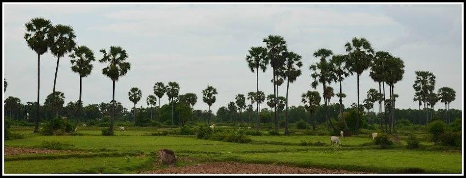 Develop Our Village Economy