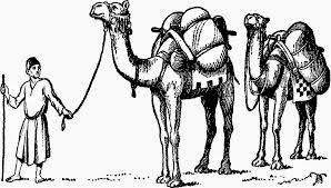 camels riddle
