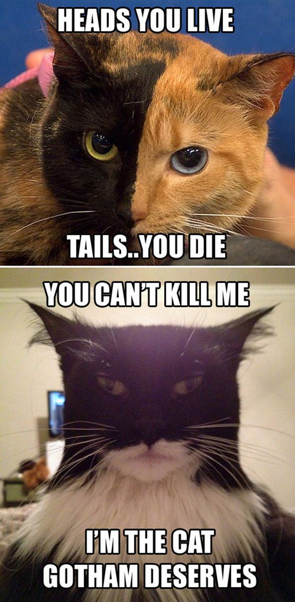 cat meme, lolcats, funny cat pictures, funny memes