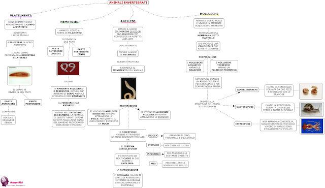 mappedsa mappa schema dsa dislessia scienze animali invertebrati platelminti nematoidi anellidi molluschi elementari medie biologia