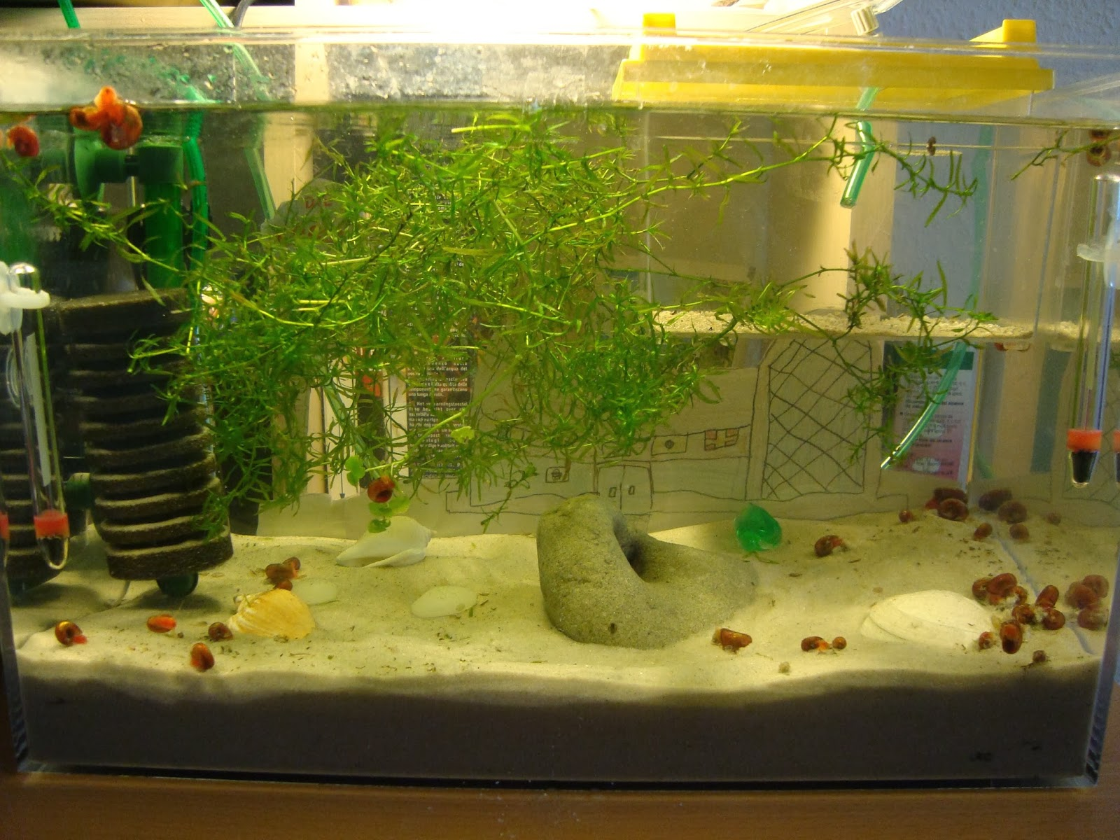 Triops Actually Turns Can Be Kept