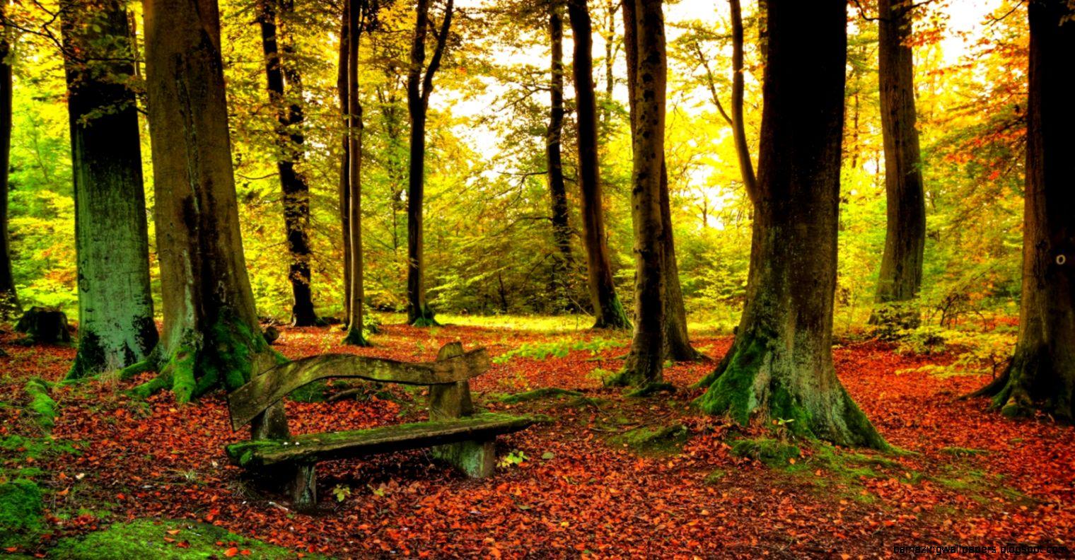 Autumn Beautiful Forest desktop wallpaper   HD Wallpaper Pic